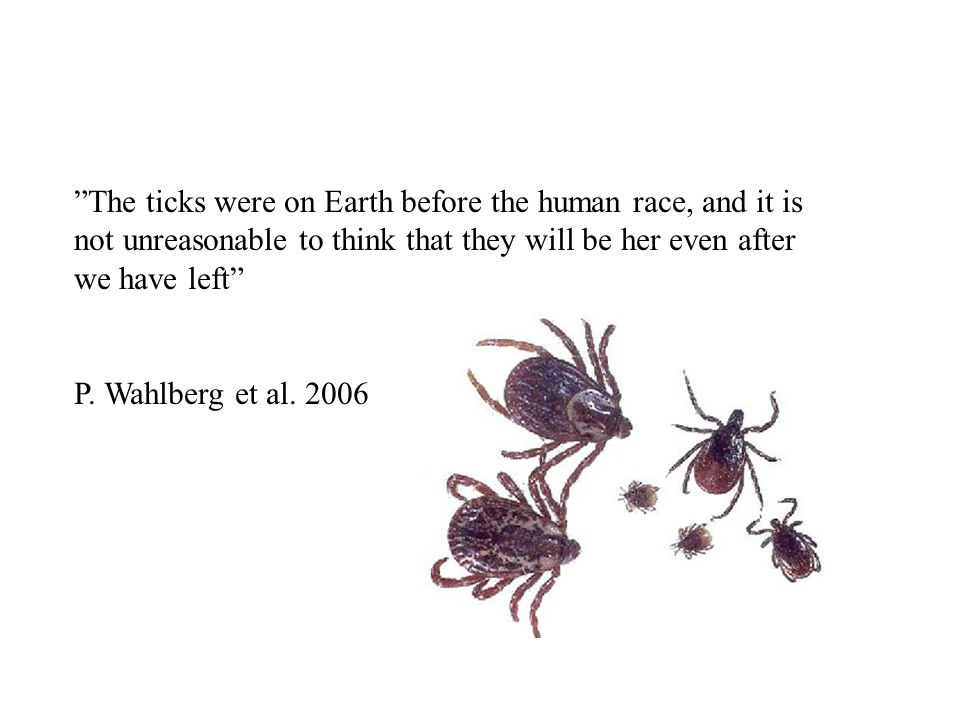 """The ticks were on Earth before the human race, and it is not unreasonable to think that they will be her even after we have left"" P. Wahlberg et al."