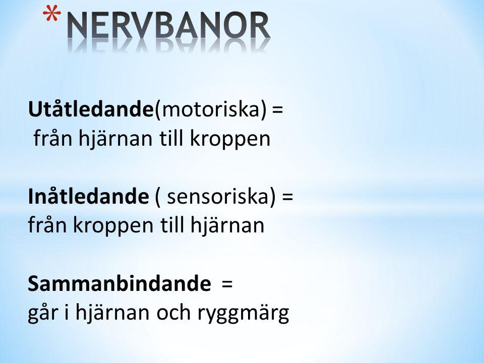 Utåtledande(motoriska) = från hjärnan till kroppen Inåtledande ( sensoriska) = från kroppen till hjärnan Sammanbindande = går i hjärnan och ryggmärg