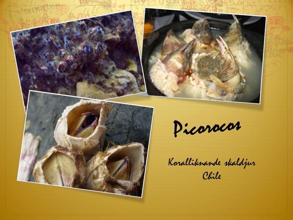 Koralliknande skaldjur Chile Picorocos