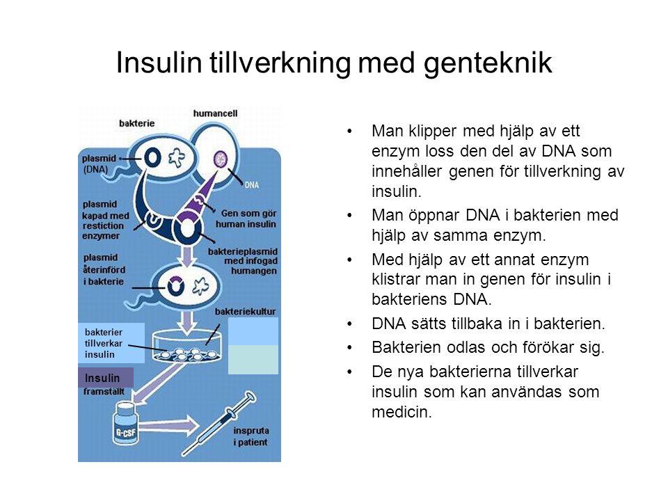 Insulin tillverkning med genteknik Man klipper med hjälp av ett enzym loss den del av DNA som innehåller genen för tillverkning av insulin. Man öppnar