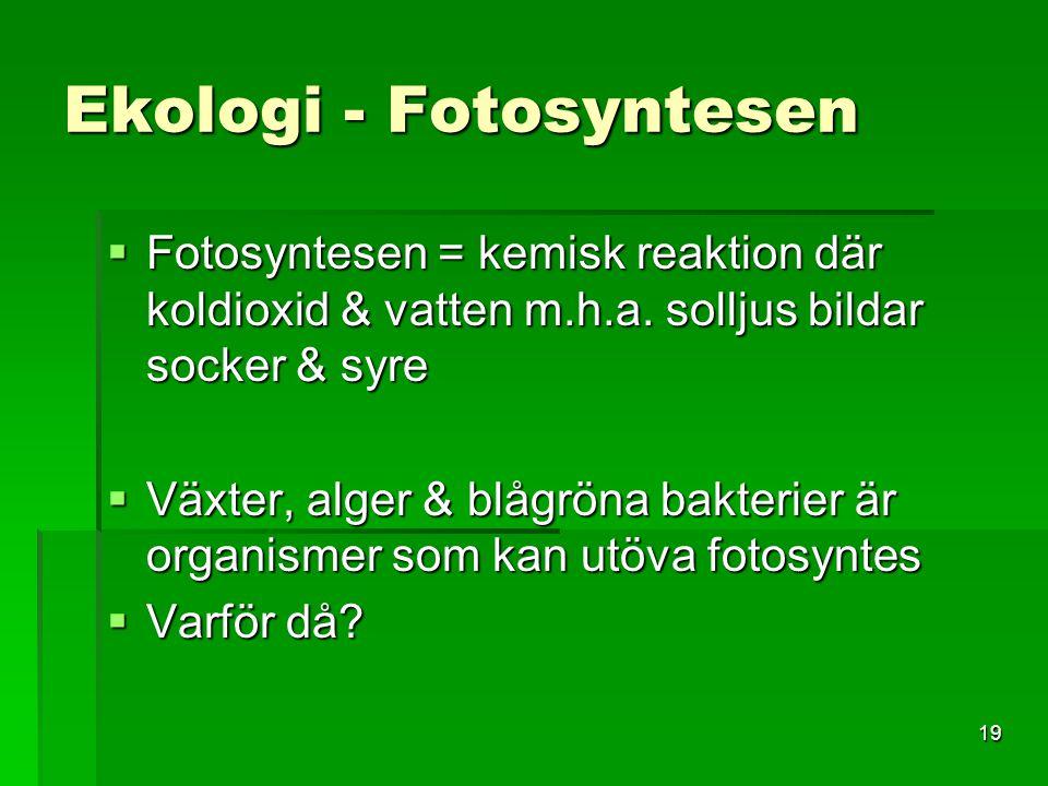 19 Ekologi - Fotosyntesen  Fotosyntesen = kemisk reaktion där koldioxid & vatten m.h.a. solljus bildar socker & syre  Växter, alger & blågröna bakte