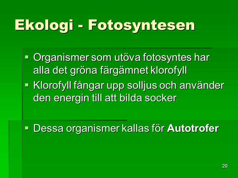 20 Ekologi - Fotosyntesen  Organismer som utöva fotosyntes har alla det gröna färgämnet klorofyll  Klorofyll fångar upp solljus och använder den ene