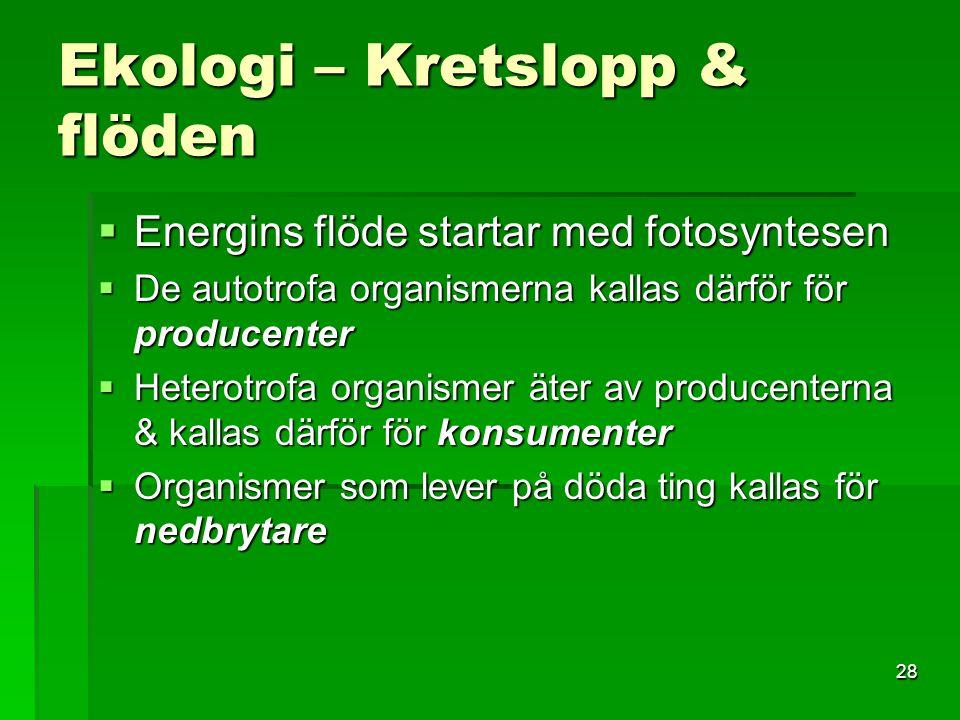 28 Ekologi – Kretslopp & flöden  Energins flöde startar med fotosyntesen  De autotrofa organismerna kallas därför för producenter  Heterotrofa orga