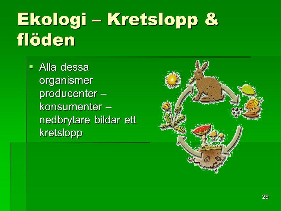 29 Ekologi – Kretslopp & flöden  Alla dessa organismer producenter – konsumenter – nedbrytare bildar ett kretslopp