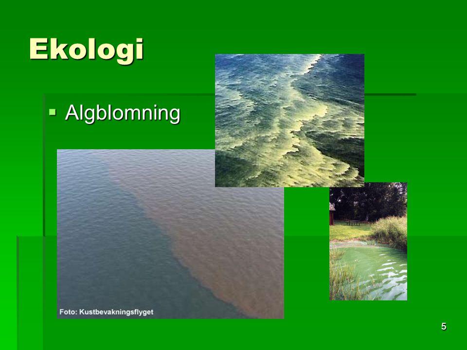 Naturkunskap A6 Ekologi  Algblomning  Algblomning är något som drabbar Östersjöns kuster årligen i mer eller mindre omfattning.