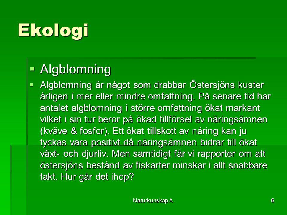 Naturkunskap A6 Ekologi  Algblomning  Algblomning är något som drabbar Östersjöns kuster årligen i mer eller mindre omfattning. På senare tid har an