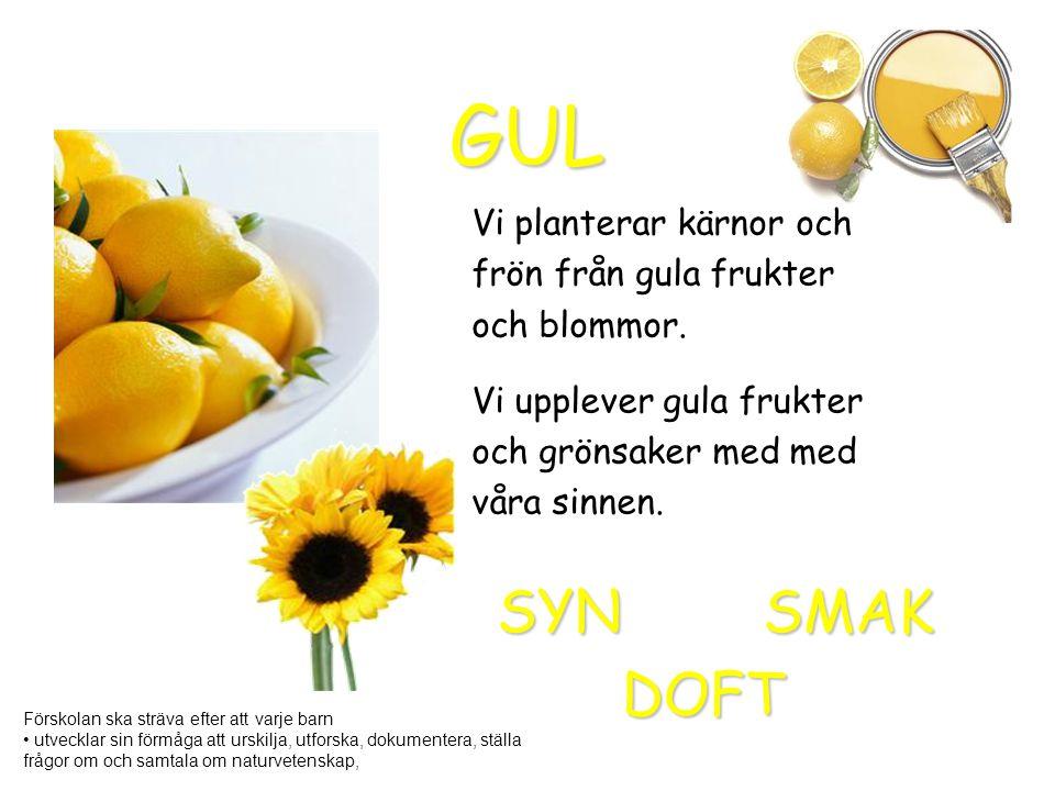 GUL Vi planterar kärnor och frön från gula frukter och blommor. Vi upplever gula frukter och grönsaker med med våra sinnen. DOFT SMAKSYN Förskolan ska