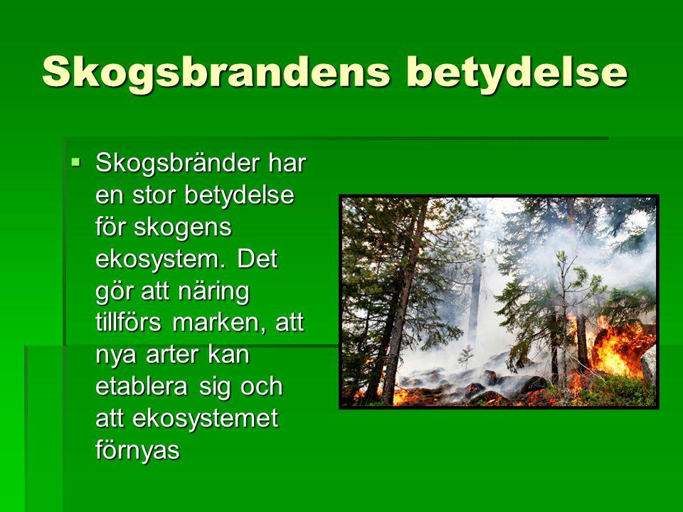 Skogsbrandens betydelse  Skogsbränder har en stor betydelse för skogens ekosystem. Det gör att näring tillförs marken, att nya arter kan etablera sig