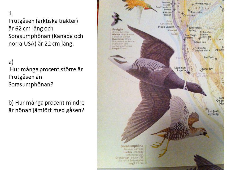 1. Prutgåsen (arktiska trakter) är 62 cm lång och Sorasumphönan (Kanada och norra USA) är 22 cm lång. a) Hur många procent större är Prutgåsen än Sora