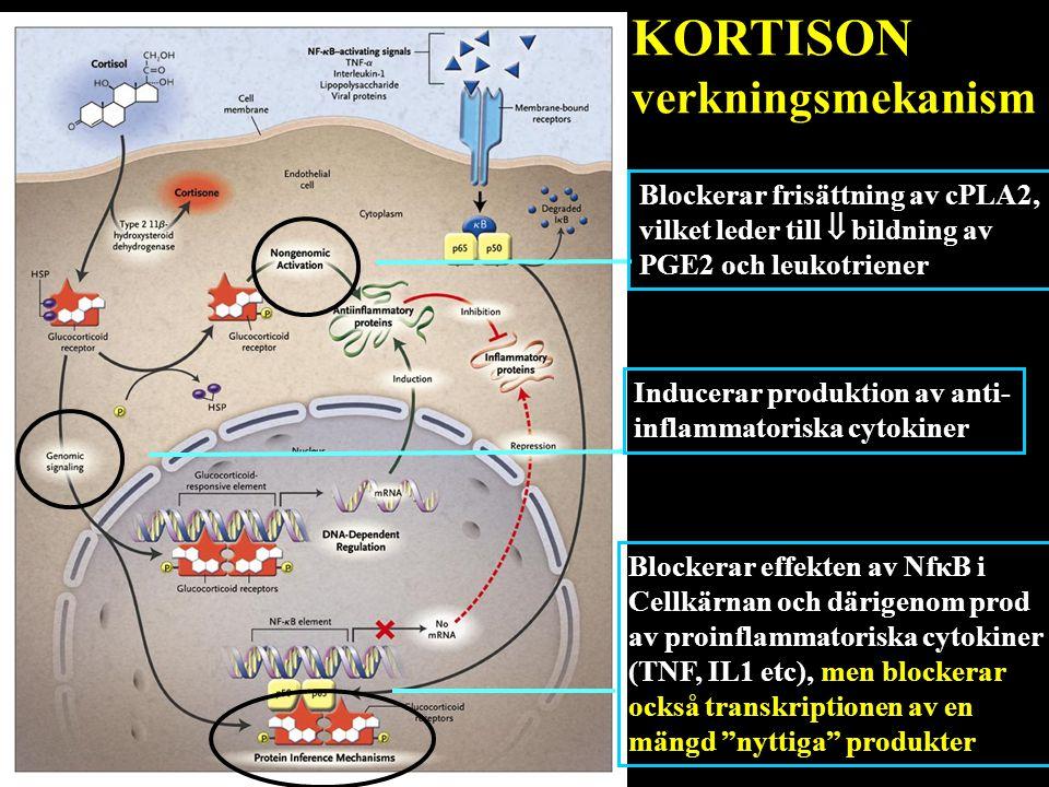 Blockerar frisättning av cPLA2, vilket leder till  bildning av PGE2 och leukotriener Blockerar effekten av NfκB i Cellkärnan och därigenom prod av pr