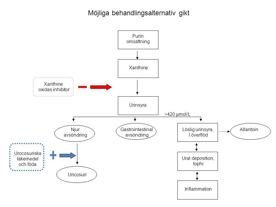 Möjliga behandlingsalternativ gikt Purin omsättning Xanthine Urinsyra Njur avsöndring Uricosuri Xanthine oxidas inhibitor Löslig urinsyra, I överflöd