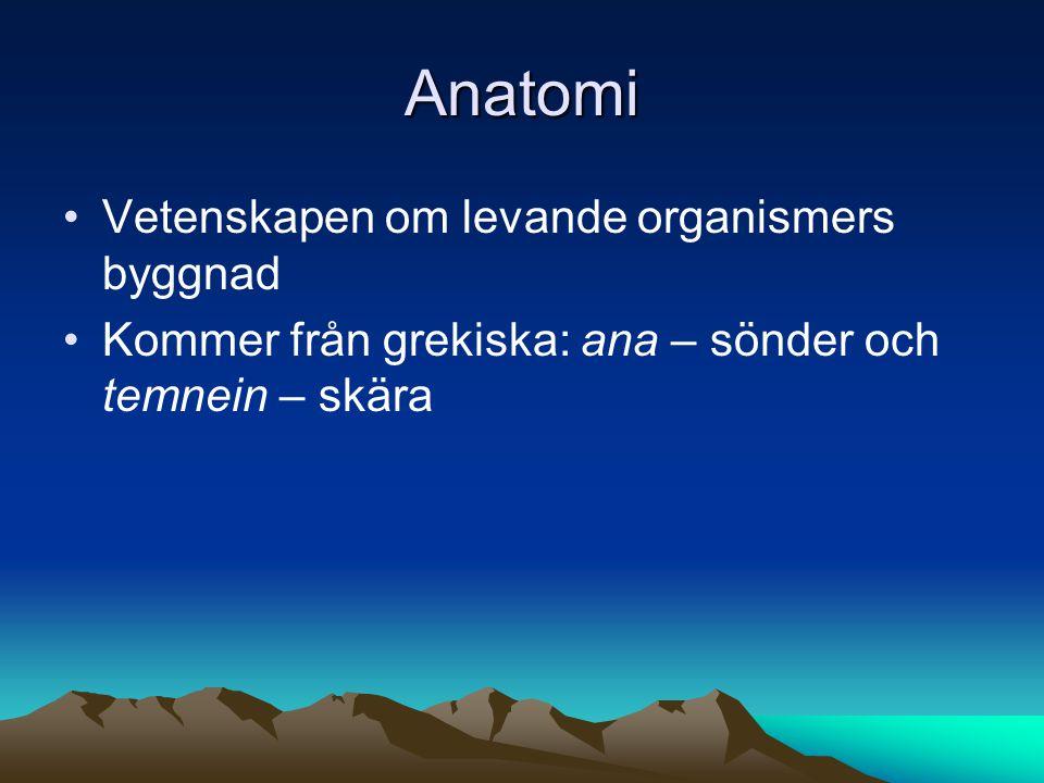 Anatomi Vetenskapen om levande organismers byggnad Kommer från grekiska: ana – sönder och temnein – skära