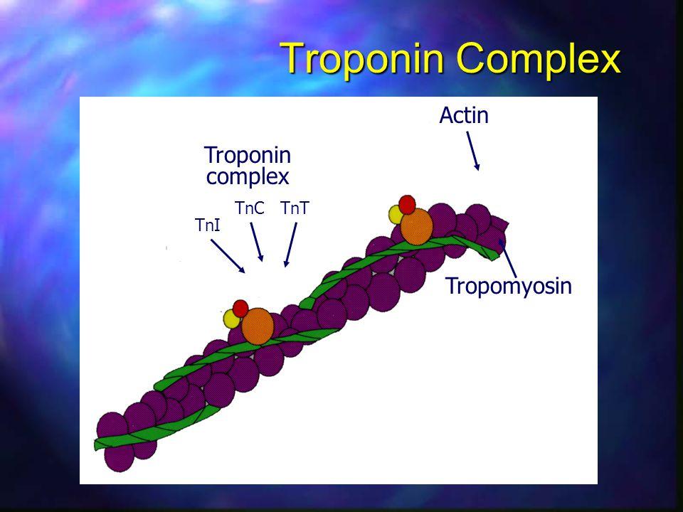Actin TnI TnCTnT Tropomyosin Troponin complex Troponin Complex