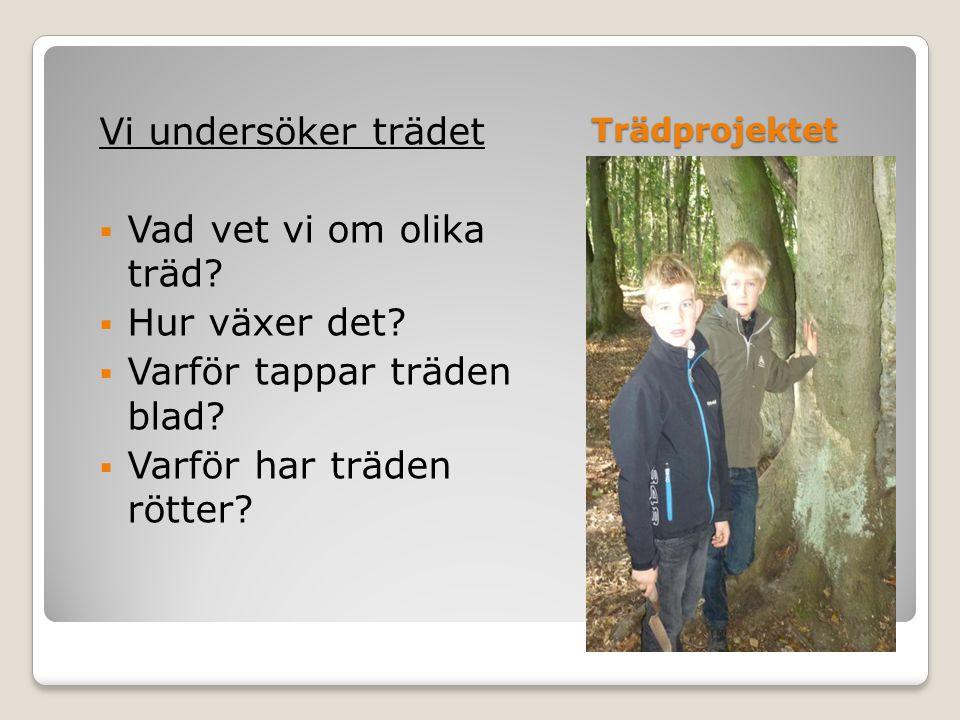 Trädprojektet Vi undersöker trädet  Vad vet vi om olika träd.