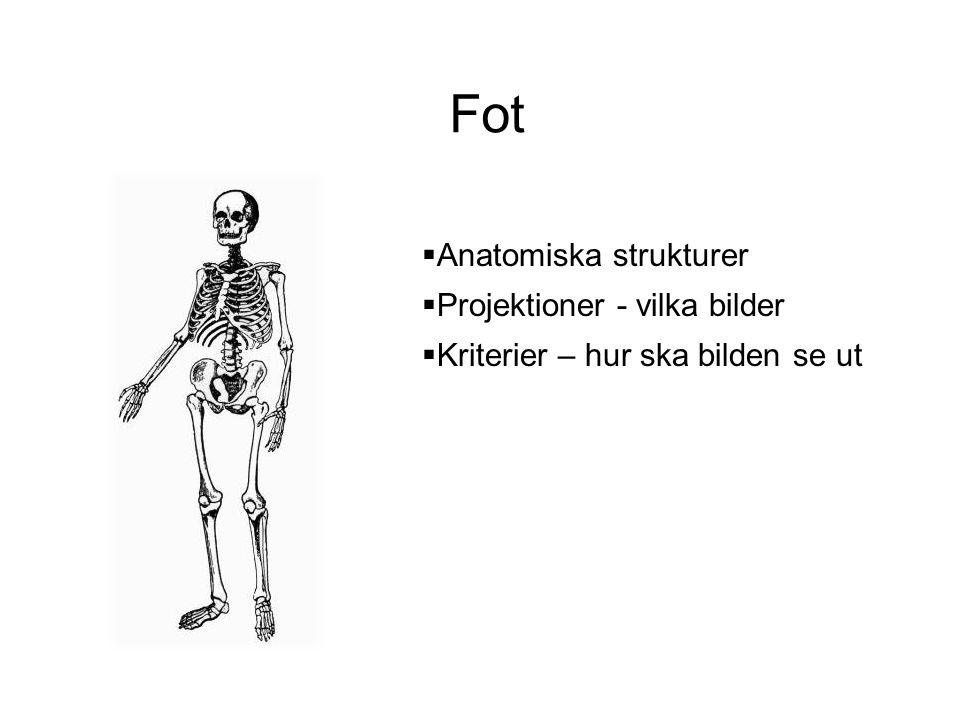 Fot  Anatomiska strukturer  Projektioner - vilka bilder  Kriterier – hur ska bilden se ut