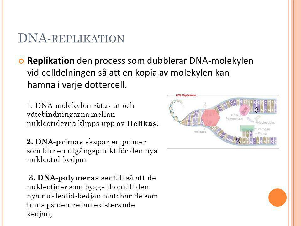 DNA- REPLIKATION Replikation den process som dubblerar DNA-molekylen vid celldelningen så att en kopia av molekylen kan hamna i varje dottercell. 1. D