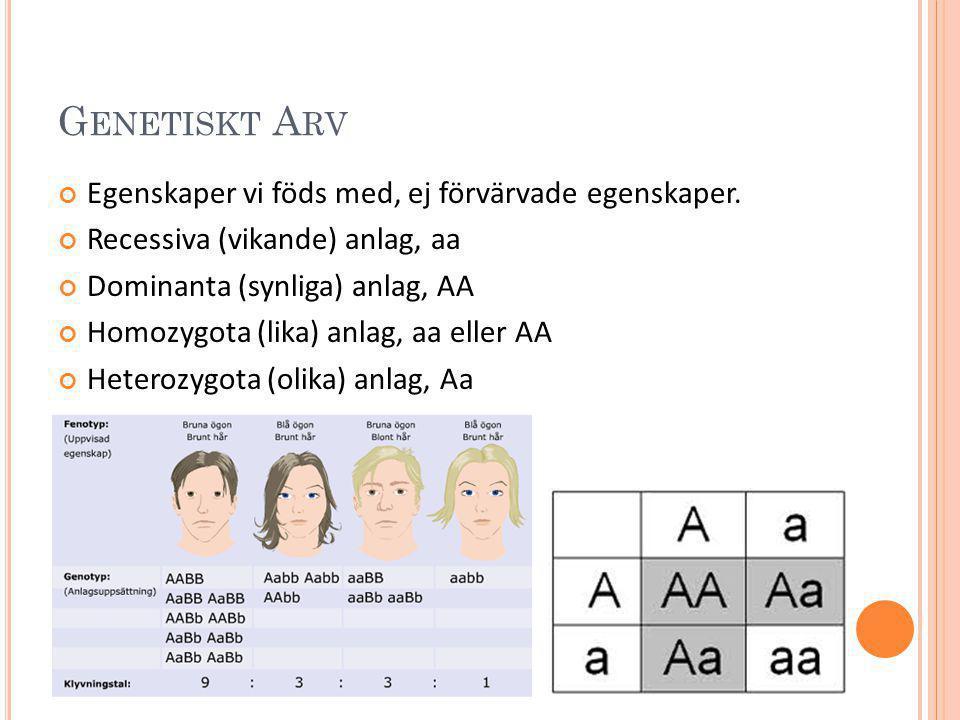 G ENETISKT A RV Egenskaper vi föds med, ej förvärvade egenskaper. Recessiva (vikande) anlag, aa Dominanta (synliga) anlag, AA Homozygota (lika) anlag,
