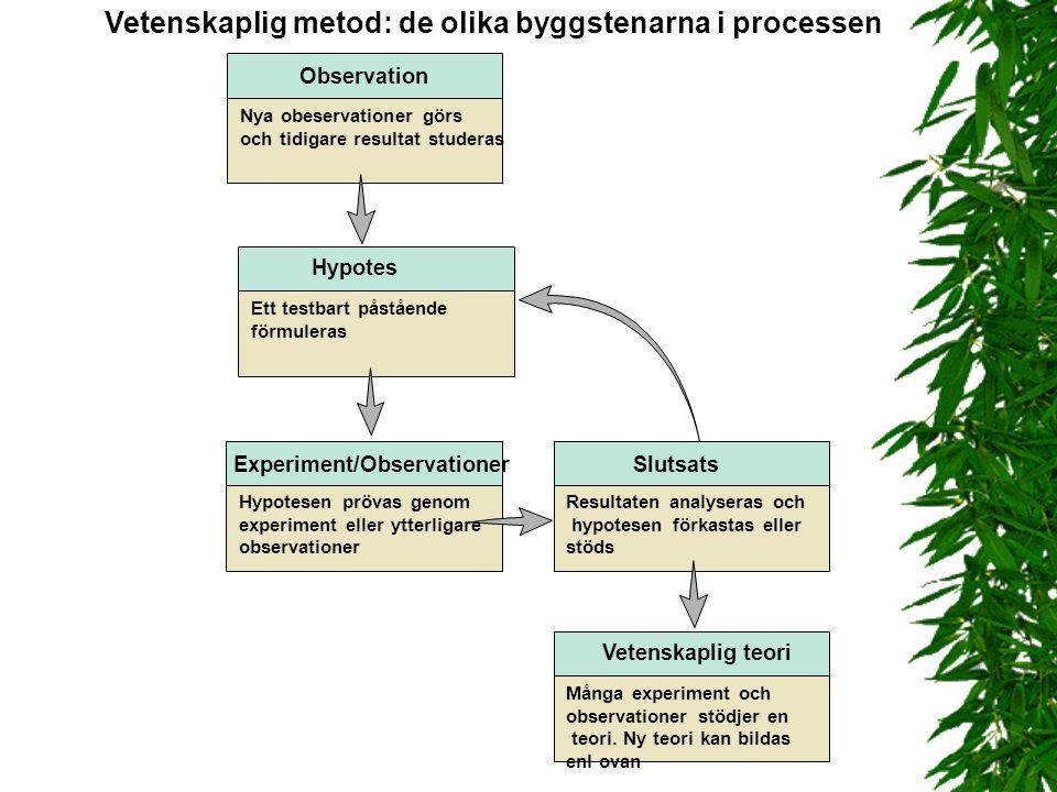 Vetenskaplig metod: de olika byggstenarna i processen Resultaten analyseras och hypotesen förkastas eller stöds SlutsatsExperiment/Observationer Hypot