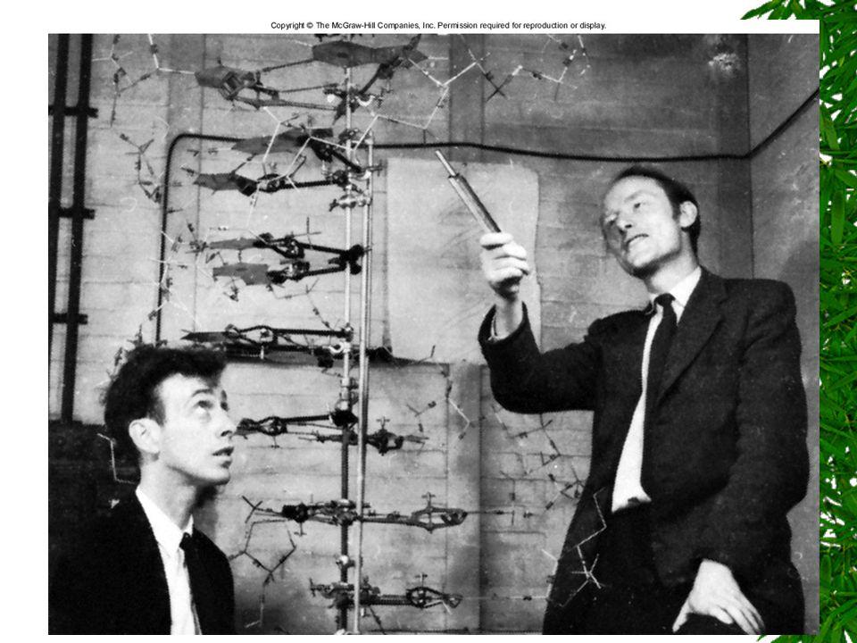 Vetenskaplig metod: de olika byggstenarna i processen Vetenskaplig teori Många experiment och observationer stödjer en teori. Ny teori kan bildas enl