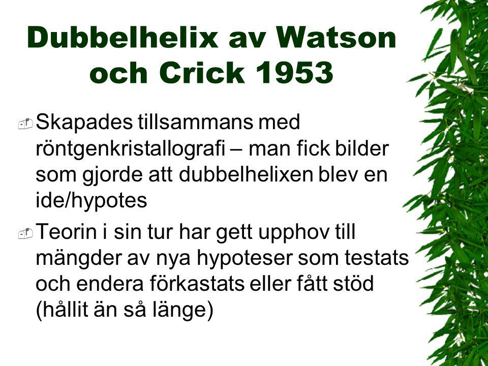 Fig. 1.3 Watson och Crick, 1953