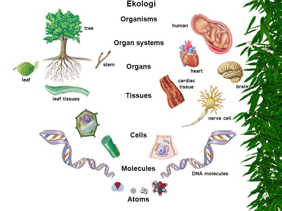 Paradigmskifte Vetenskapen måste vara beredd att ändra sina teorier.