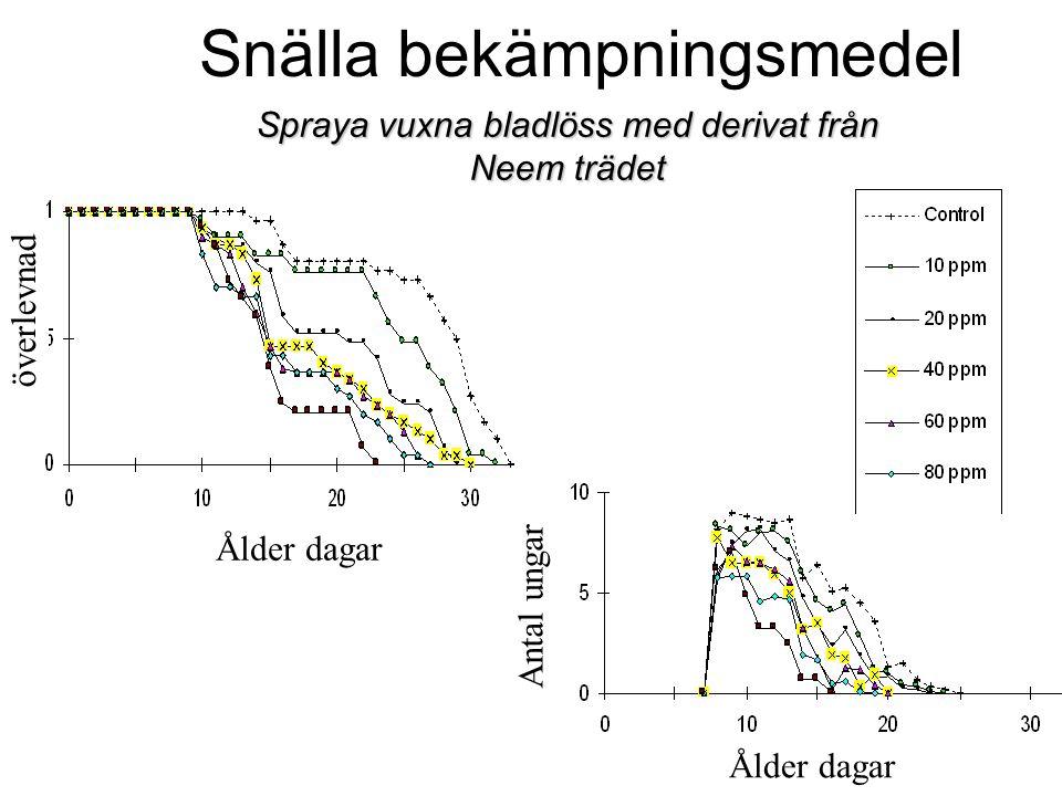 Spraya vuxna bladlöss med derivat från Neem trädet Snälla bekämpningsmedel Antal ungar Ålder dagar överlevnad Ålder dagar