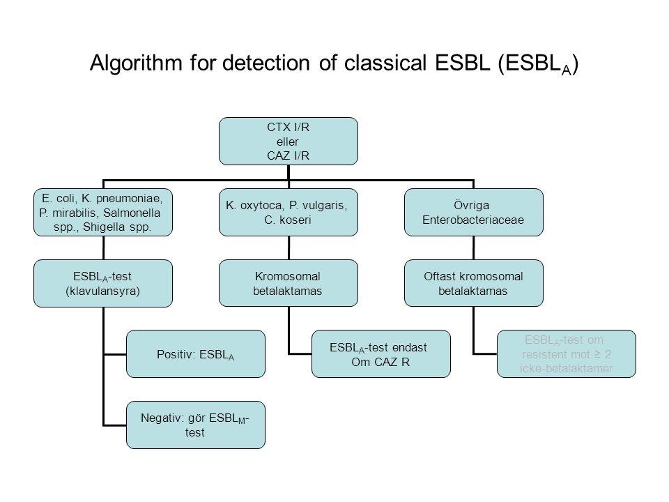 Algorithm for detection of AmpC (ESBL M ) ESBL A -negativa E.
