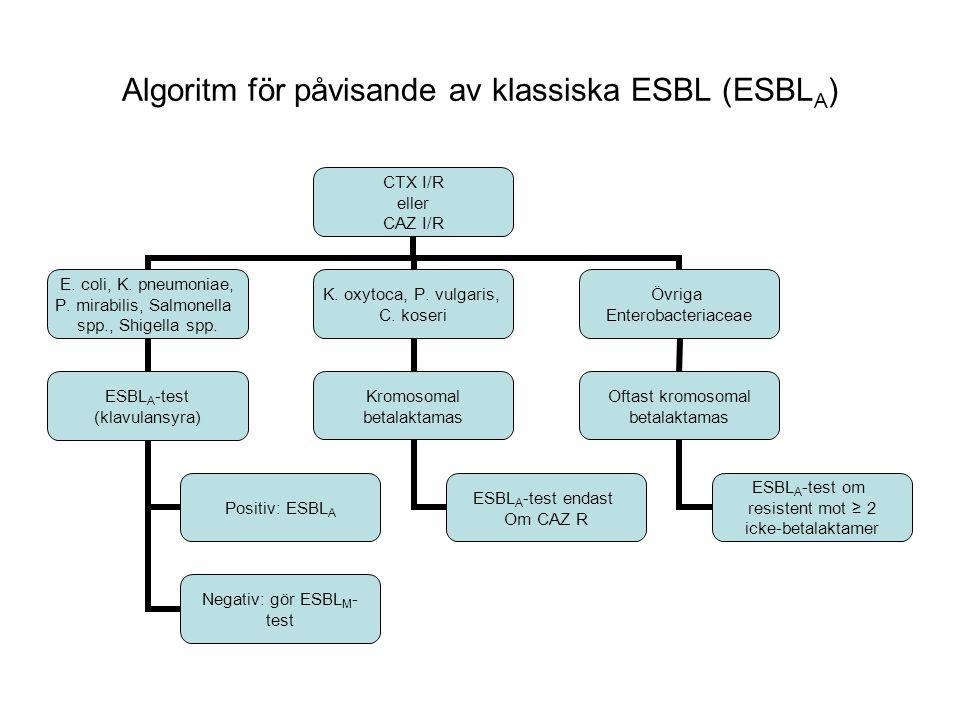 Algoritm för påvisande av klassiska ESBL (ESBL A ) CTX I/R eller CAZ I/R E.