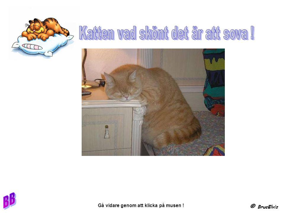 ® BrucElvis Gå vidare genom att klicka på musen !