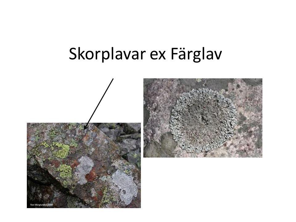 Skorplavar ex Färglav