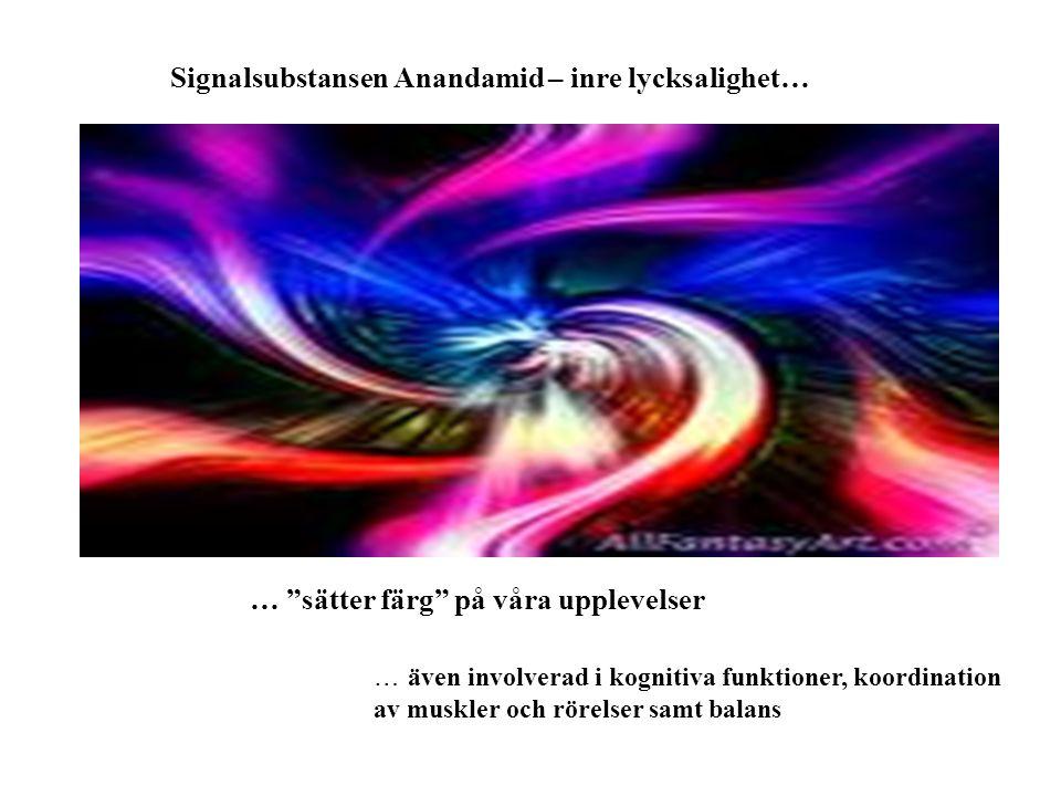 """Signalsubstansen Anandamid – inre lycksalighet… … """"sätter färg"""" på våra upplevelser … även involverad i kognitiva funktioner, koordination av muskler"""