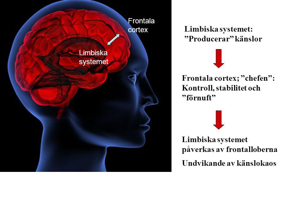 """Limbiska systemet: """"Producerar"""" känslor Frontala cortex; """"chefen"""": Kontroll, stabilitet och """"förnuft"""" Limbiska systemet påverkas av frontalloberna Und"""