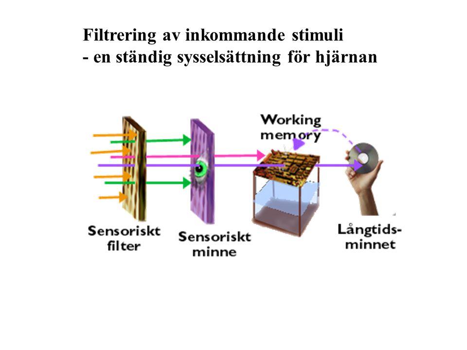 Filtrering av inkommande stimuli - en ständig sysselsättning för hjärnan