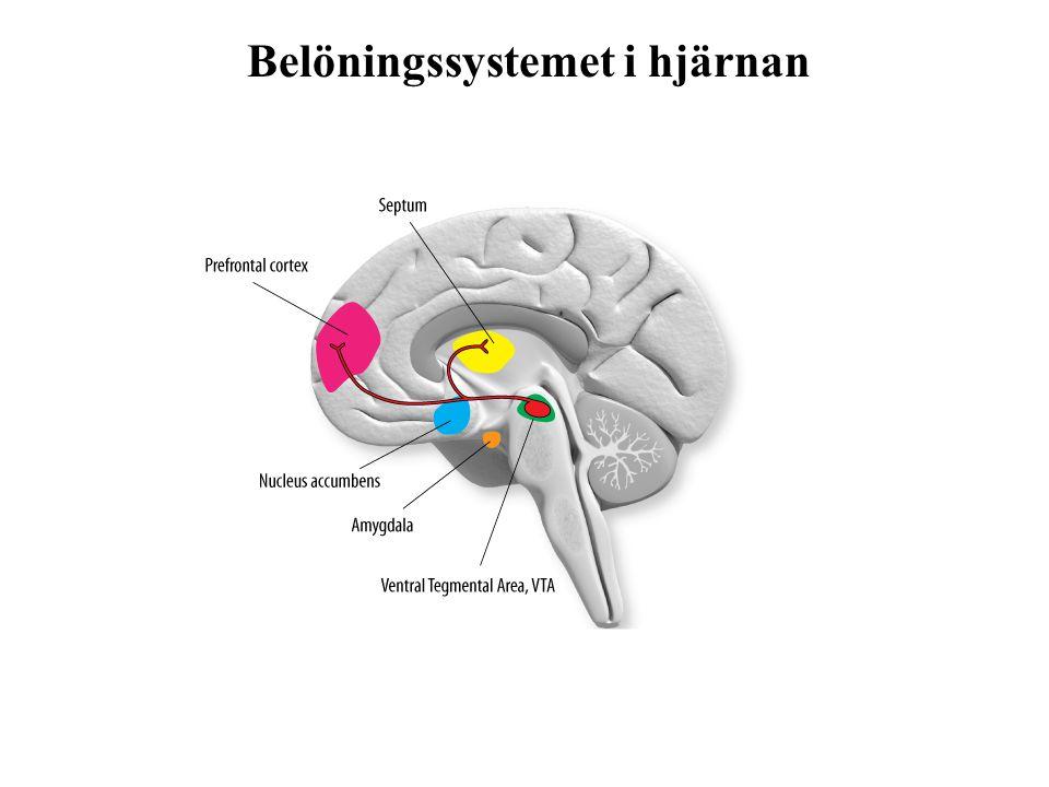 Kompensatorisk hjärnaktivitet: Mer utspridd hjärnaktivitet Hjärnan får arbeta hårdare