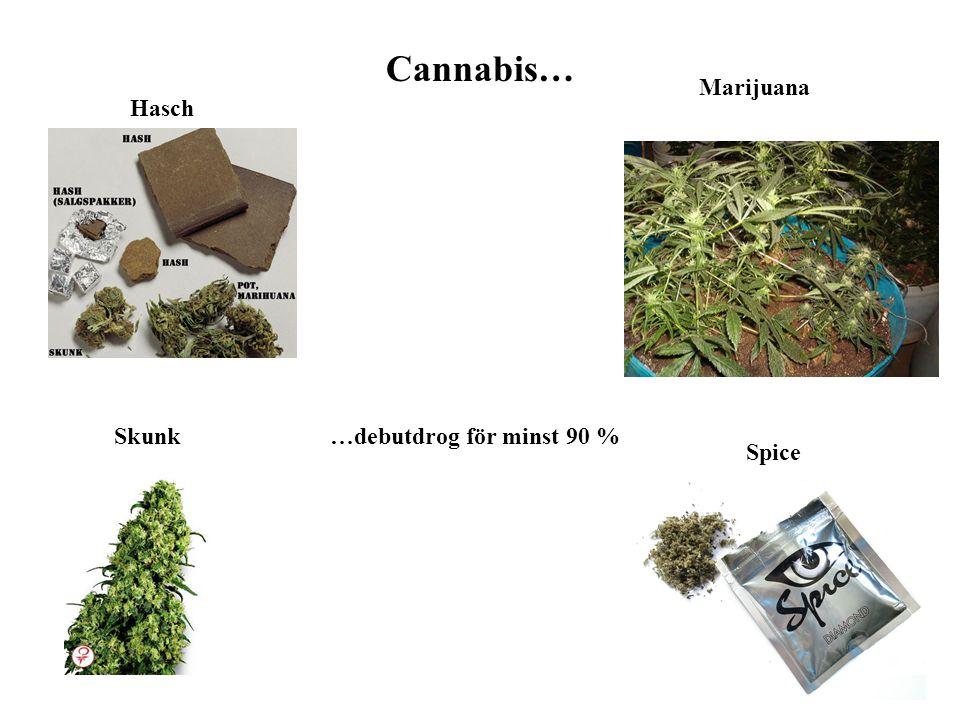 Cannabis… Hasch Skunk Spice Marijuana …debutdrog för minst 90 %