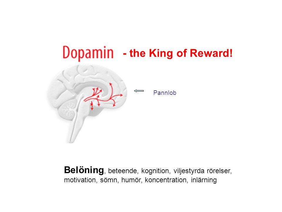 Belöning, beteende, kognition, viljestyrda rörelser, motivation, sömn, humör, koncentration, inlärning Pannlob - the King of Reward!