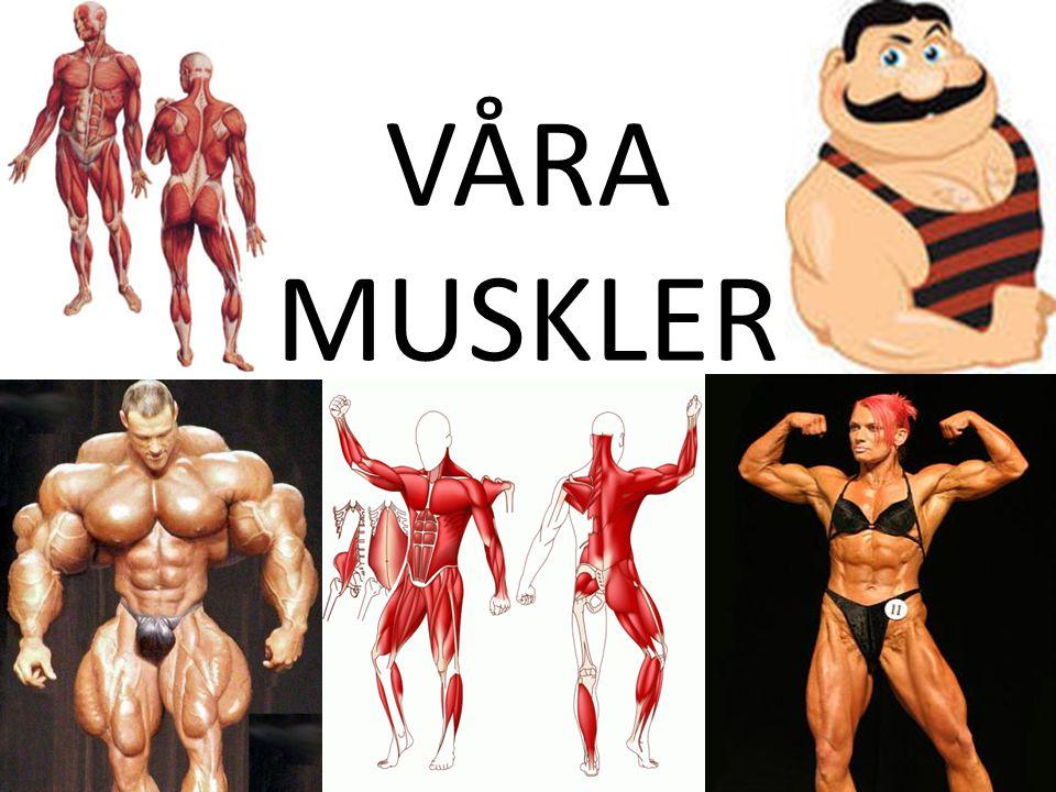 VÅRA MUSKLER