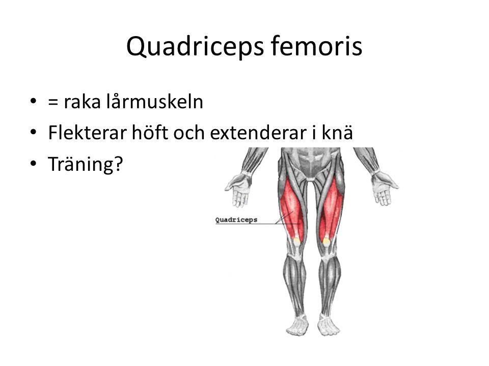 Quadriceps femoris = raka lårmuskeln Flekterar höft och extenderar i knä Träning?