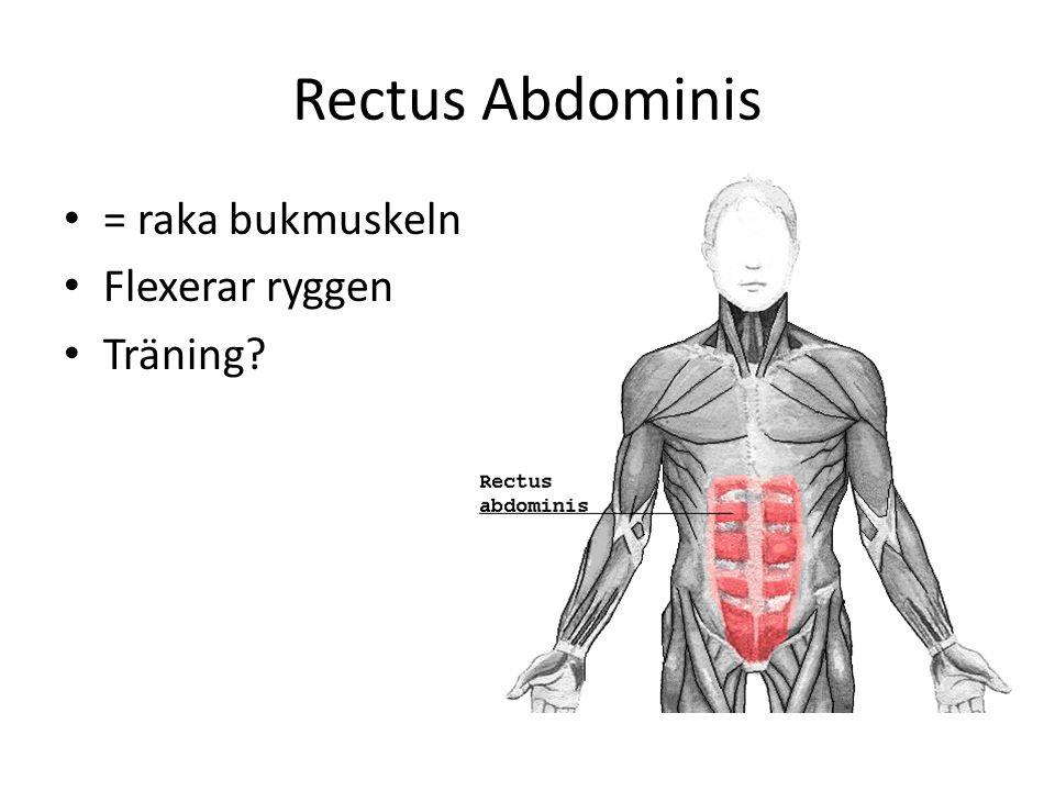 Rectus Abdominis = raka bukmuskeln Flexerar ryggen Träning?