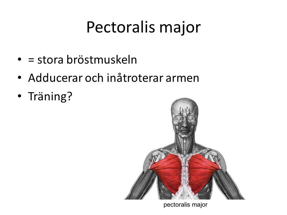 Pectoralis major = stora bröstmuskeln Adducerar och inåtroterar armen Träning?