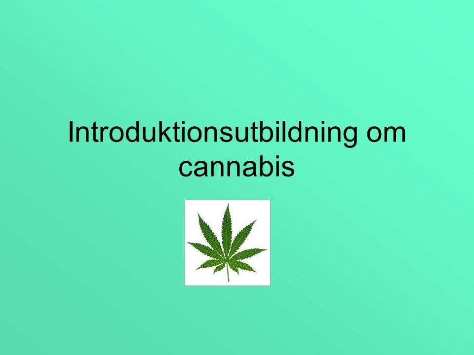 Utbildningsstruktur Allmän info om cannabis och särskild behandling – 1/2dag.