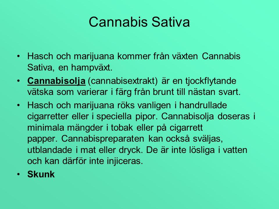 Cannabis är fettlösligt, vilket gör att det stannar upp till 6 veckor i kroppen.