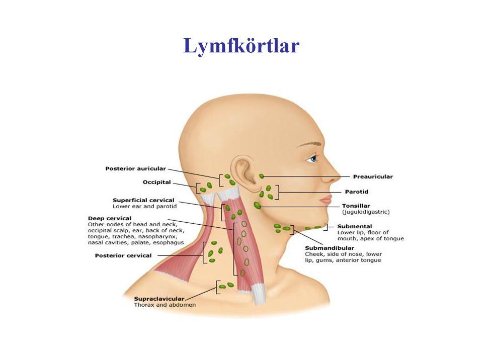 Lymfkörtlar