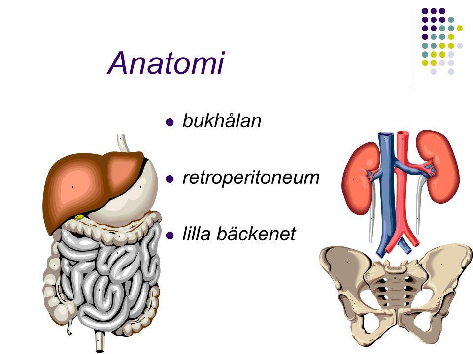 Anatomi bukhålan retroperitoneum lilla bäckenet