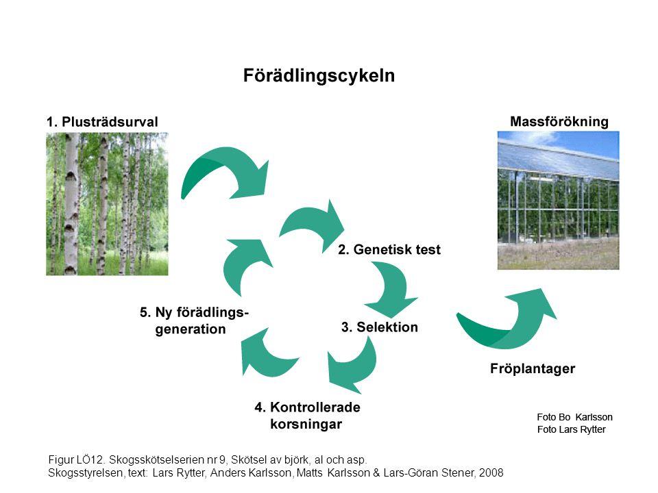 Figur LÖ12. Skogsskötselserien nr 9, Skötsel av björk, al och asp. Skogsstyrelsen, text: Lars Rytter, Anders Karlsson, Matts Karlsson & Lars-Göran Ste