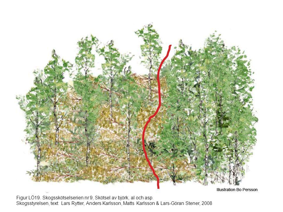 Figur LÖ19. Skogsskötselserien nr 9, Skötsel av björk, al och asp. Skogsstyrelsen, text: Lars Rytter, Anders Karlsson, Matts Karlsson & Lars-Göran Ste