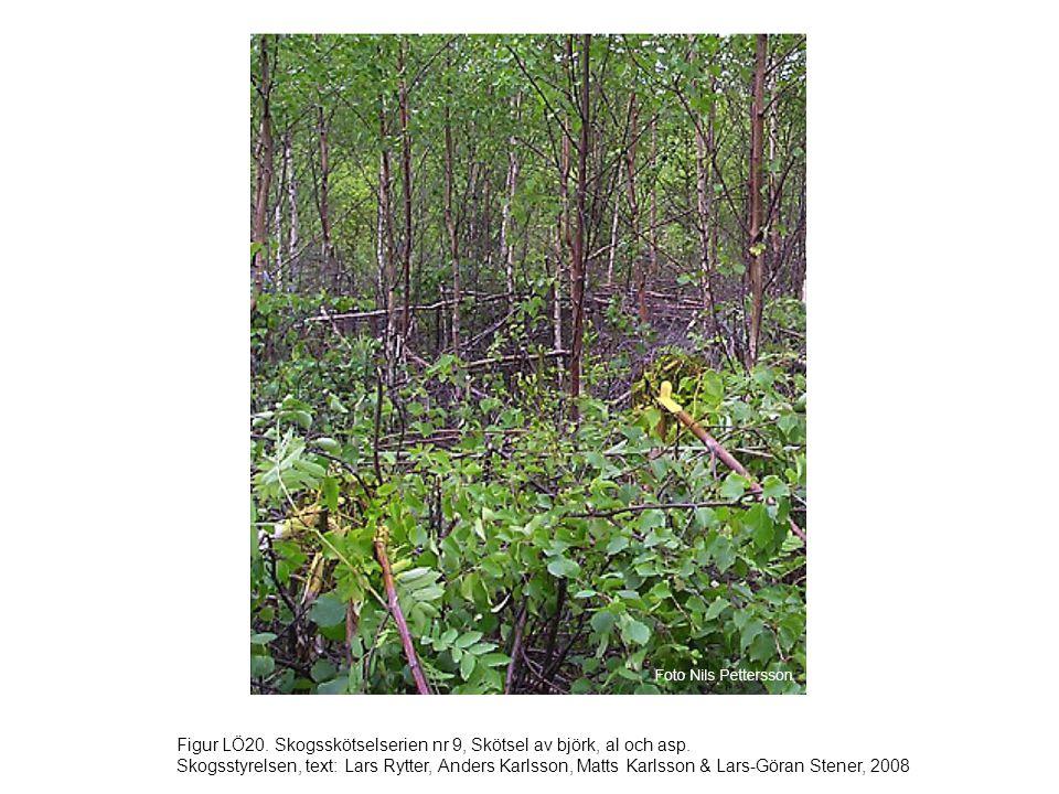 Figur LÖ20. Skogsskötselserien nr 9, Skötsel av björk, al och asp. Skogsstyrelsen, text: Lars Rytter, Anders Karlsson, Matts Karlsson & Lars-Göran Ste