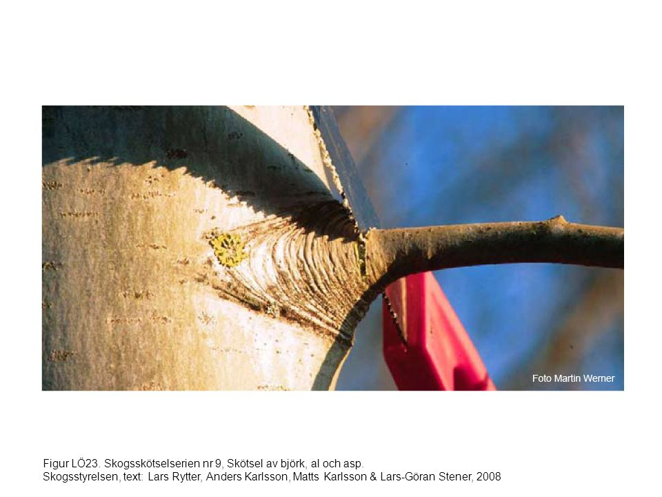 Figur LÖ23. Skogsskötselserien nr 9, Skötsel av björk, al och asp. Skogsstyrelsen, text: Lars Rytter, Anders Karlsson, Matts Karlsson & Lars-Göran Ste