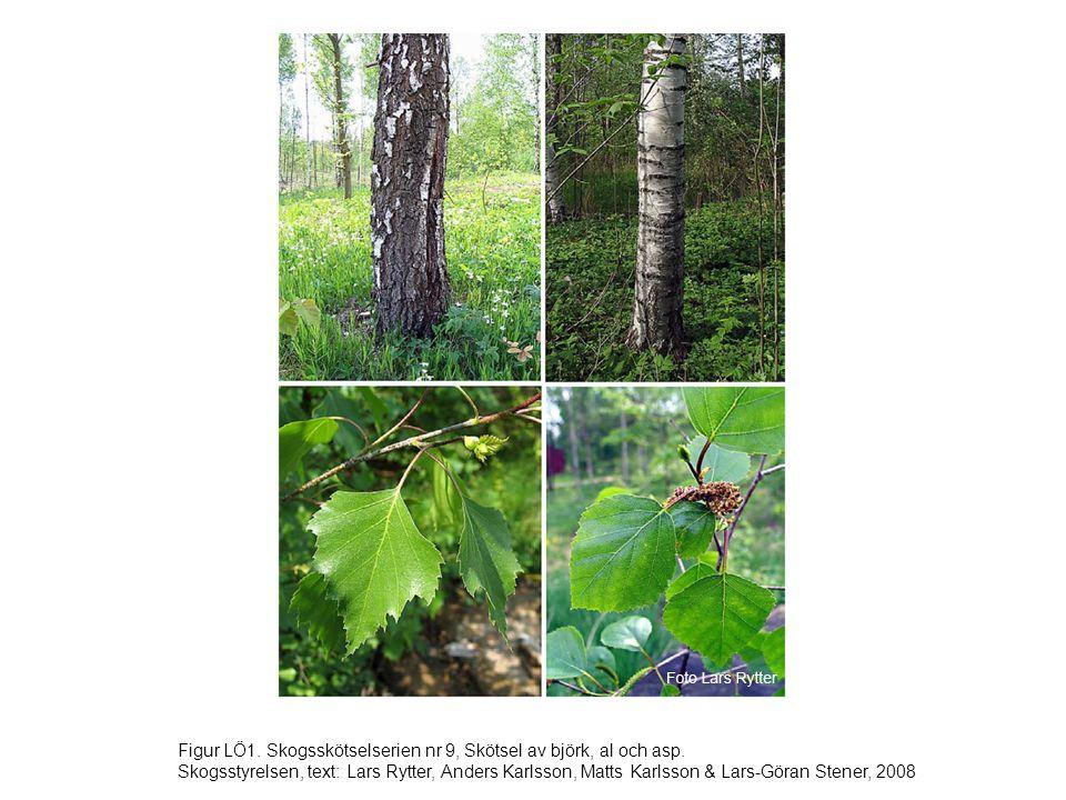 Figur LÖ32.Skogsskötselserien nr 9, Skötsel av björk, al och asp.