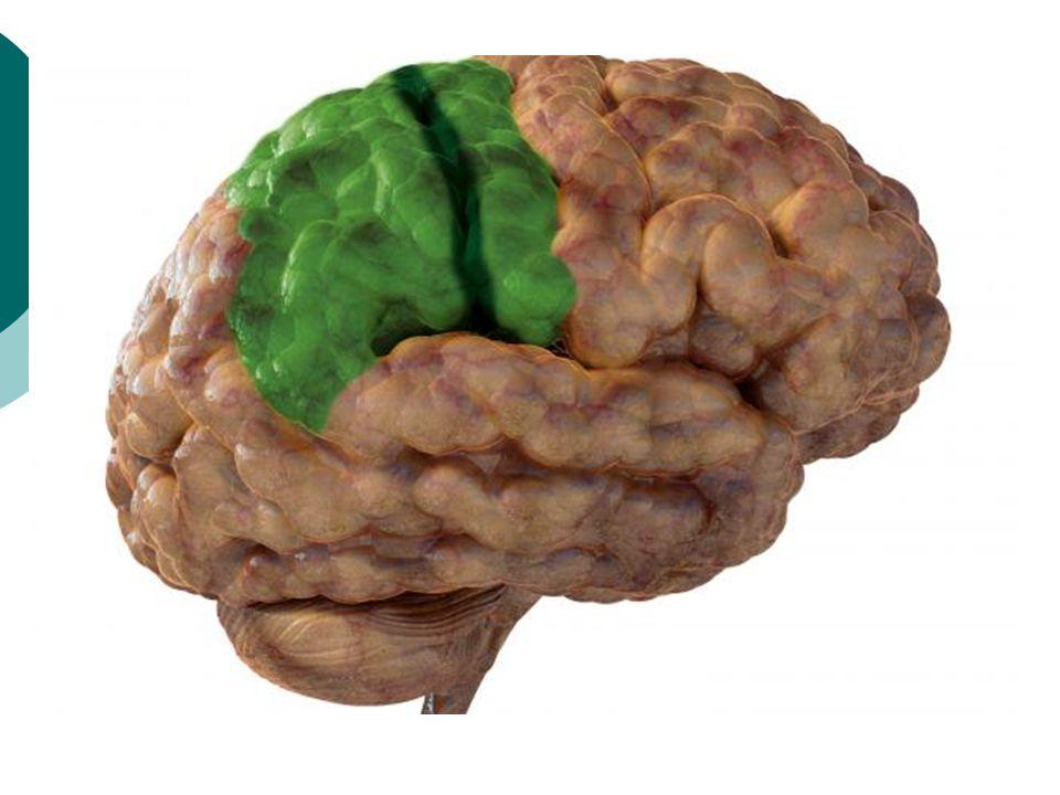  Ett system som tillfälligt håller information  Verbala, visuospatiala, auditiva AM  Working Memory Span – IQ.